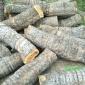 厂家直销工艺枣木 直径15-40公分工艺枣木  雕刻枣木  大直径枣木原木