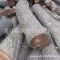 优质杏木原木  适用于各种工艺品制作