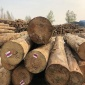 日照市岚山区武林木材加工厂